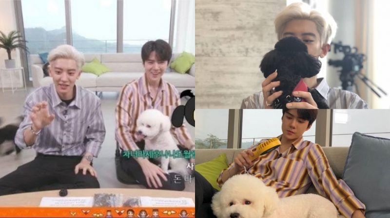 宠物的性格真的随主人了!EXO-SC(世勋&灿烈)带著萌宠VIVI、多芬出演《MLT2》