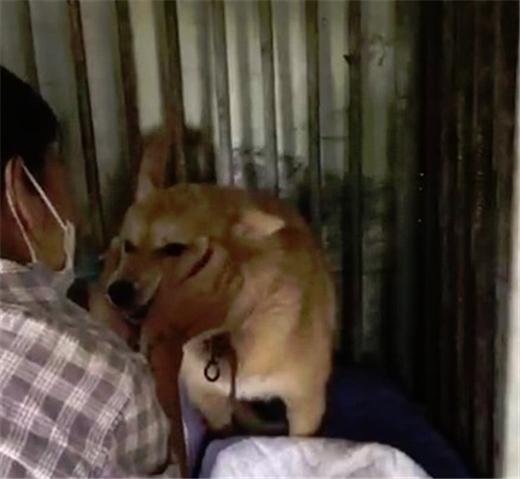 李孝利通过SNS求助 受疫情影响流浪犬领养遇困难